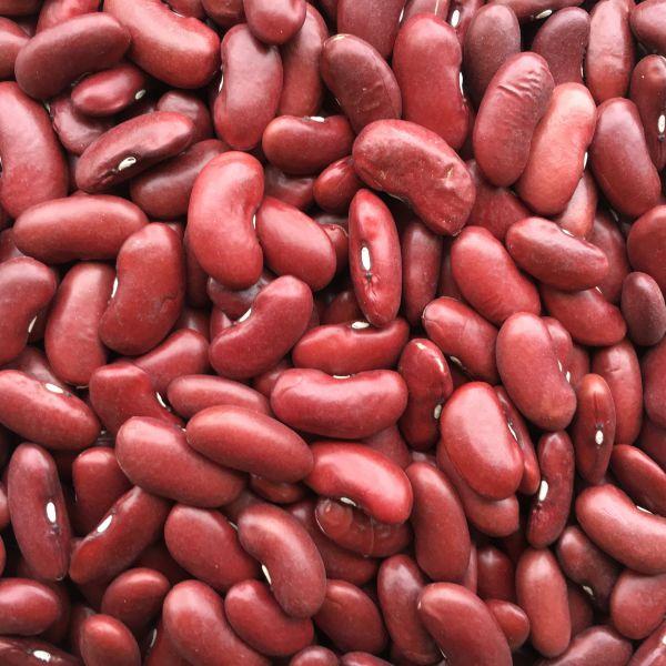 Kidneybohnen - Nierenbohnen rot