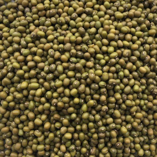 Mung Dal grün - Mungbohnen keimfähig