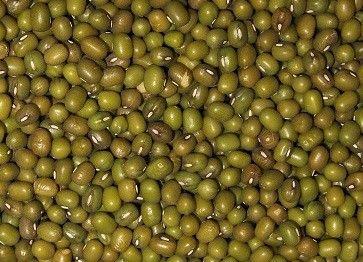 Mungbohnen Dal grün ganz keimfähig