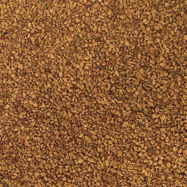 Bockshornklee Samen ganz - nicht keimfähig